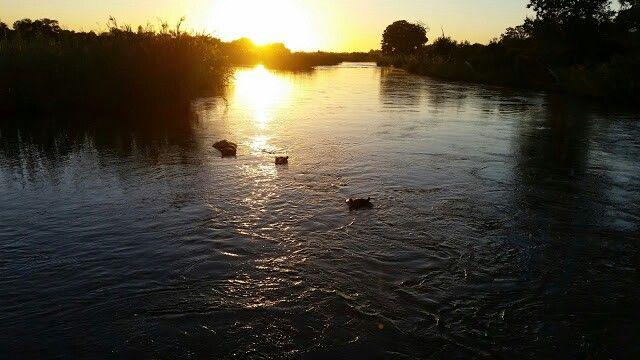 Sunset hippos - Kruger National Park