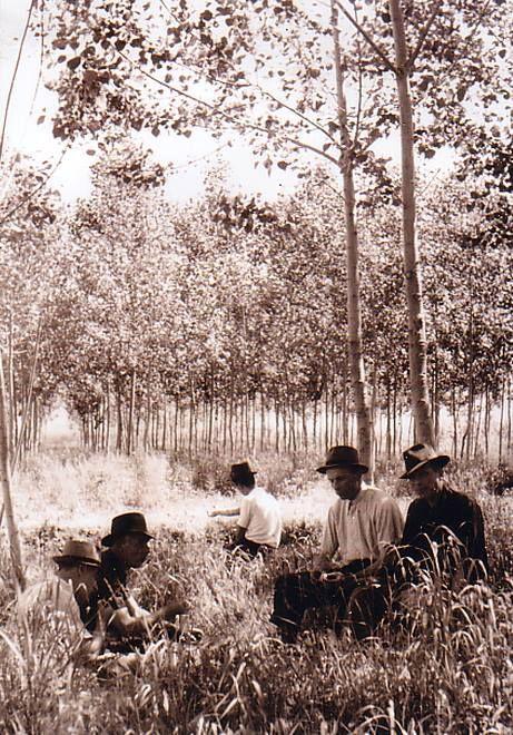 Riposo sotto i pioppi - 1925.