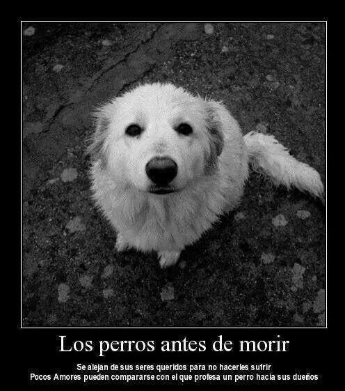 los perros antes de morir se alejan