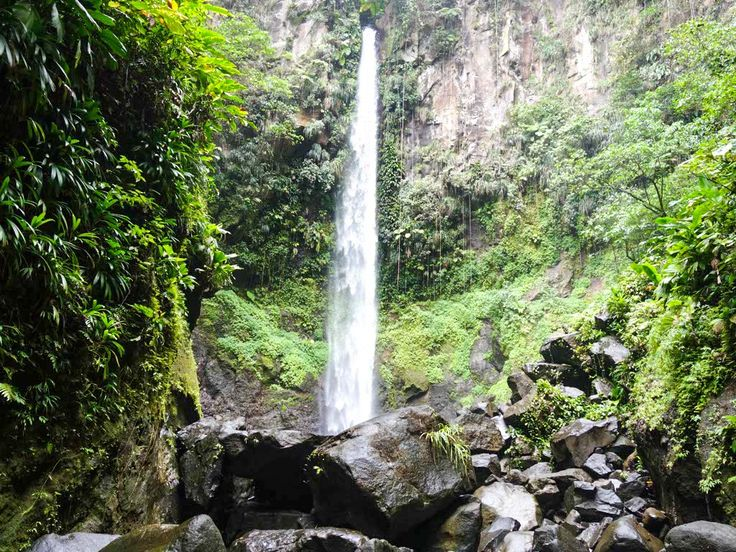 """Dominica is a natural paradise. It is lush and a breath of fresh air. Known as """"The Nature Island,"""" Dominica's tropical rainforests cover two thirds of the island, and are home to 1,200 plant speci…"""