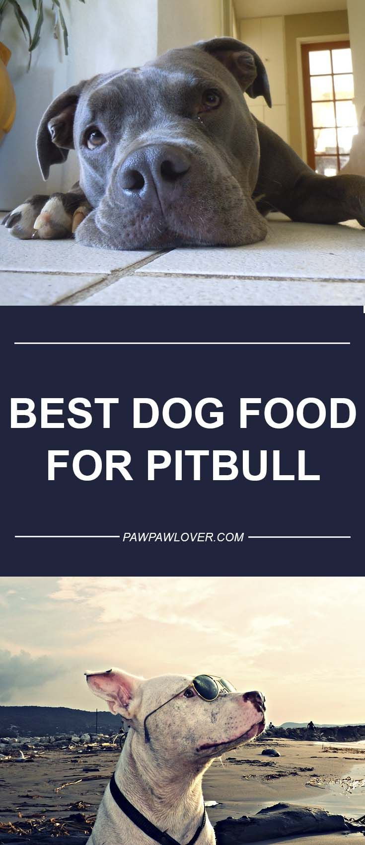 10 Best Dog Foods For Pitbulls Our 2020 Bully Feeding Guide