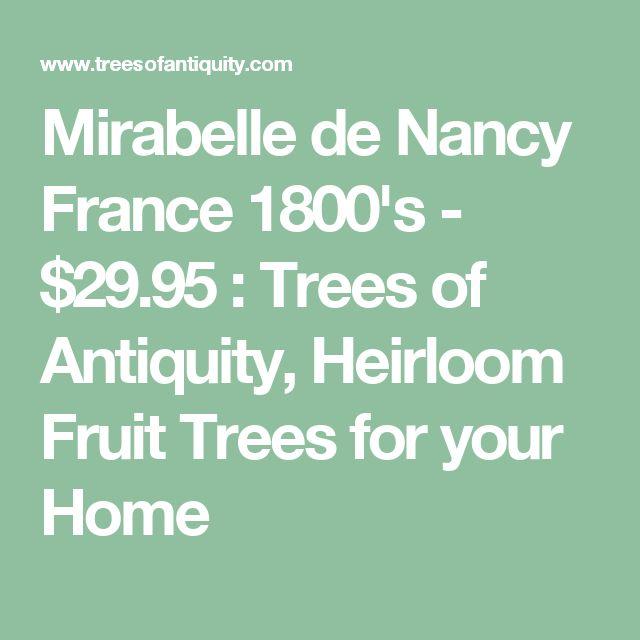 Mirabelle de Nancy France 1800's - $29.95 : Trees of Antiquity, Heirloom Fruit Trees for your Home