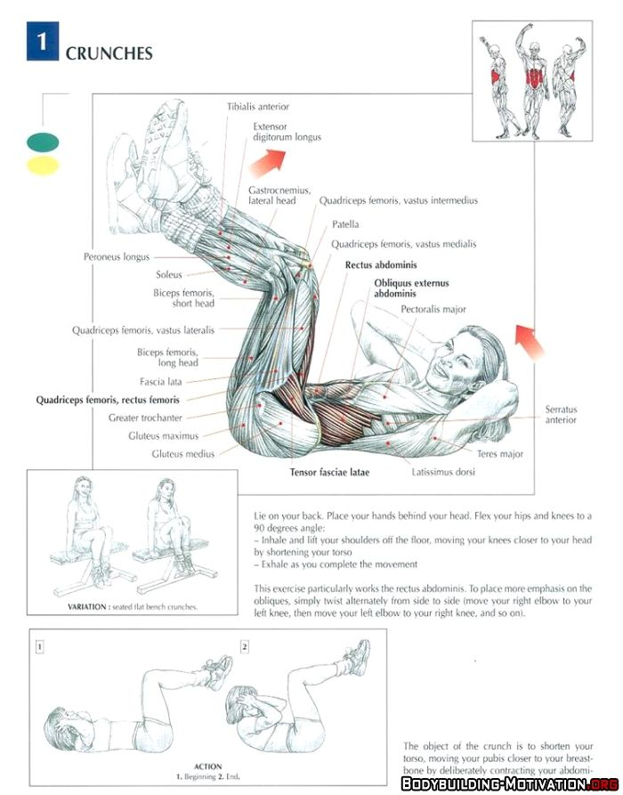 Training Anatomy - AB - Crunches