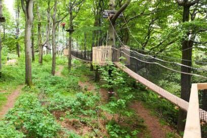 Auf Hängebrücken wandeln Besucher auf dem Weg am Hoherodskopf in Vogelsberg   – ausflugsziele