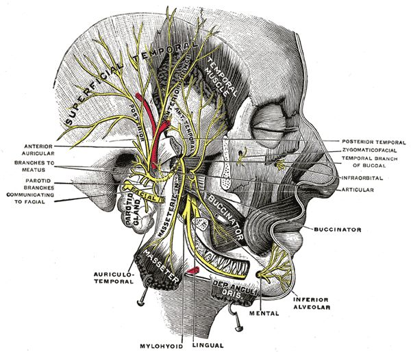 100 Best Anatomy Images On Pinterest Human Anatomy Human Body And
