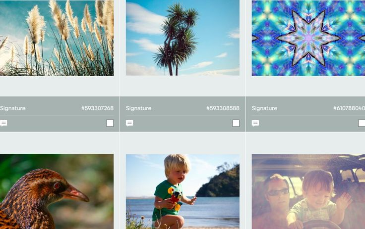 LazingBee Photos NZ (@LazingBeePhotos) | Twitter