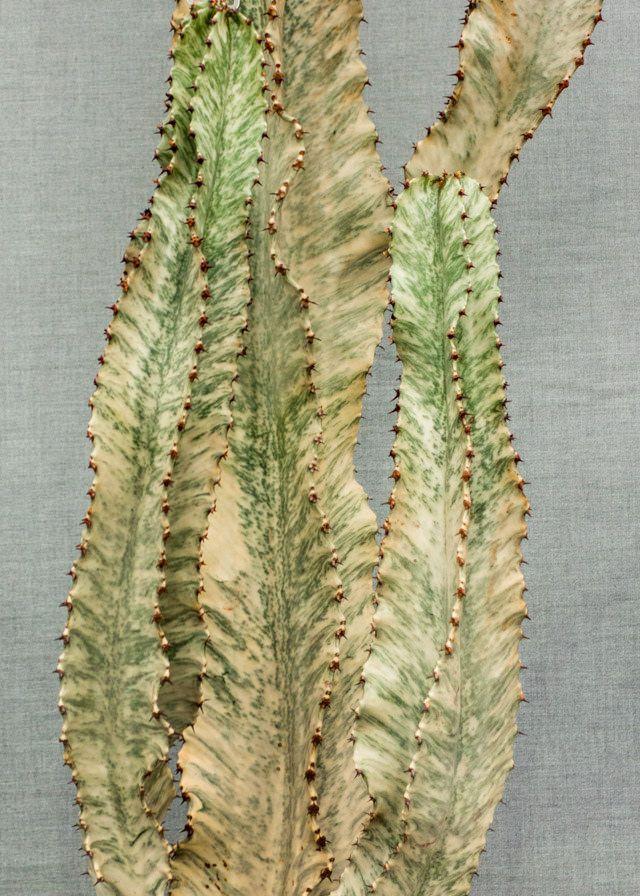 cactus at RHS cardiff