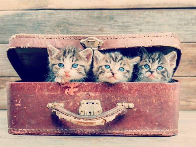 Katzen Fotos Die Sussesten Katzenbilder Katzen Fotos Katzen Bilder Tier Fotos