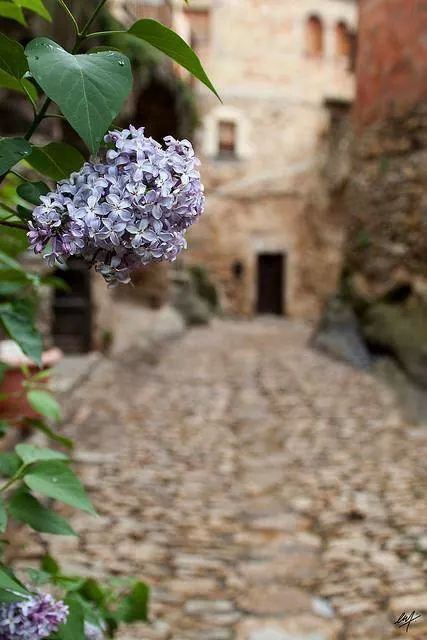 ♔ Enchanted Fairytale Dreams ♔: Enchanted Fairytale, Fresco Outdoor Living, Fairytale Dreams, Color Purple, Beautiful Plants, Brides Style