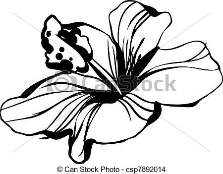 33 best hybiscus study images on pinterest line art stripes and art google - Dessin hibiscus ...