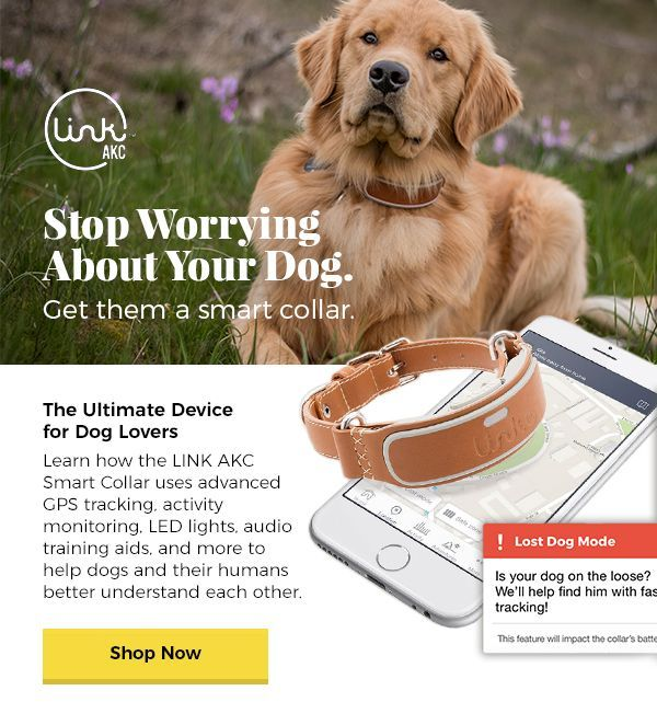 Stop Worrying About Your Dog. Get them a smart collar. They Ultimate Device for Dog Lovers - Learn how the LINK AKC Smart Collar uses advanced GPS tracking, activity monitoring, LED lights, audio training aids, and more to help dogs and their humans better understand each other.