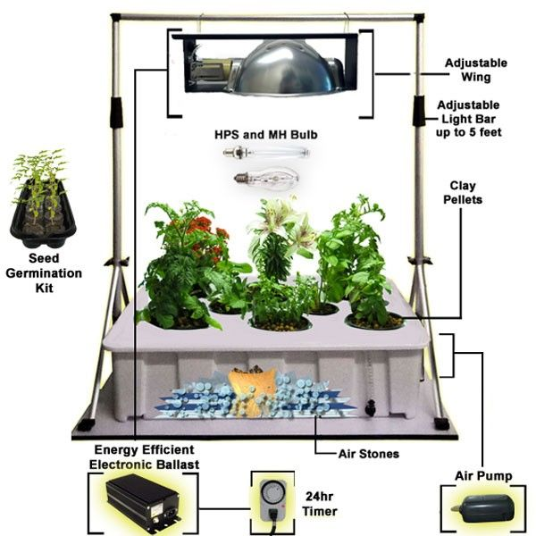 indoor house plant watering systems html with Hydroponics Kits on Distressed Wood Windowbox as well Agricultural Hydroponic Nft Planting Growing Systems 60528823207 additionally Hydroponics Kits furthermore Phoenix Roebelenii pygmy Date Palm 58715 in addition Ficus Nitida Indian Laurel 41293.