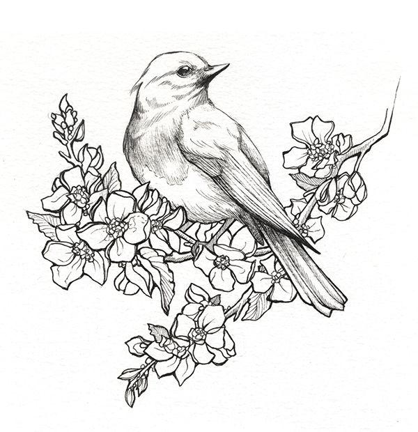 State Birds & Flowers on Behance