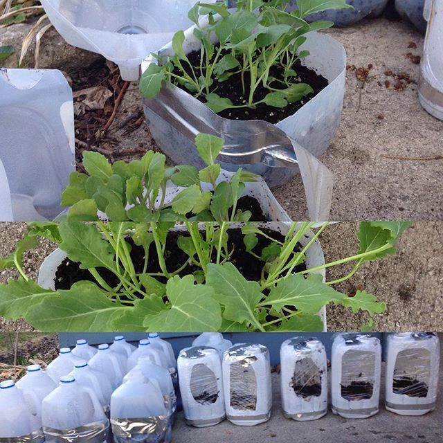17 Best Images About Regrow Veggies On Pinterest: 17 Best Images About Vegetable Garden Ideas On Pinterest
