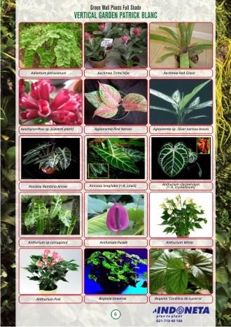 Jenis tanaman vertical garden 0811-900-858. Kaya warna dan jenis tanaman hias nan indah. Jasa taman vertikal INDONETA 0811-900-858.