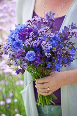 Amethyst and Sapphire Cut Flower Mix - Anchusa 'Blue Angel' (Alkinet) & Salvia viridis 'Blue' (Blue Clary) provide the lower storey, Centaurea 'Blue Boy' (Cornflower) & Verbena bonariensis the upper.