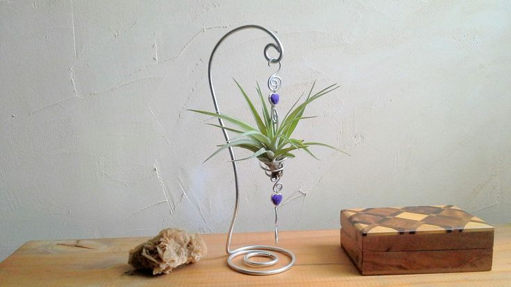 tillandsia ⚓ fille de l ' air ⚓ plante aérienne ⚓ décoration à poser : Accessoires de maison par lartisane