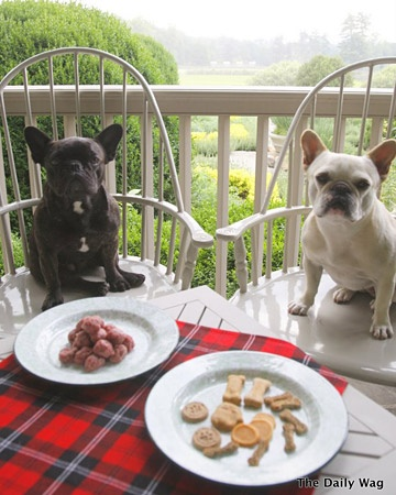 Dining al fresco ... thanks for sharing Martha.: Stewart Dogs, Dining Al, French Bulldogs, Fresco Luncheon, Pet, Lunches Time, Frenchi Picnics, To Fresh, Bulldogs Lunches