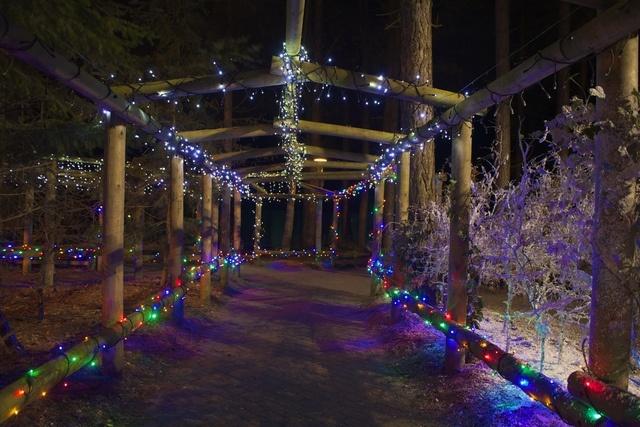 Elveden Forest by Center Parcs UK, via Flickr