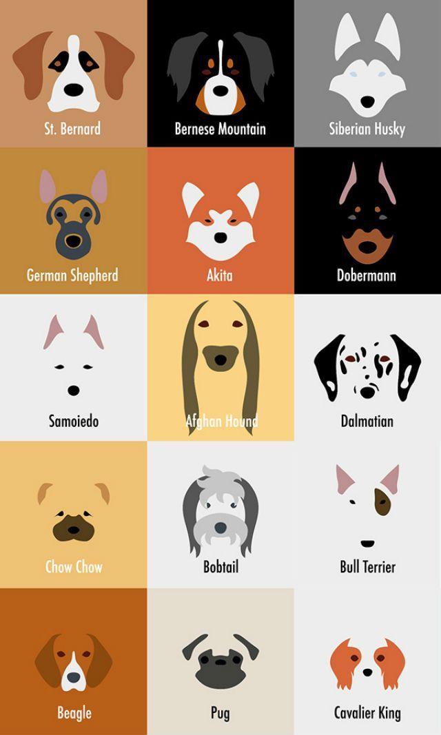 Você vai ficar completamente apaixonado pelas ilustrações caninas da italiana Laura Palumbo.