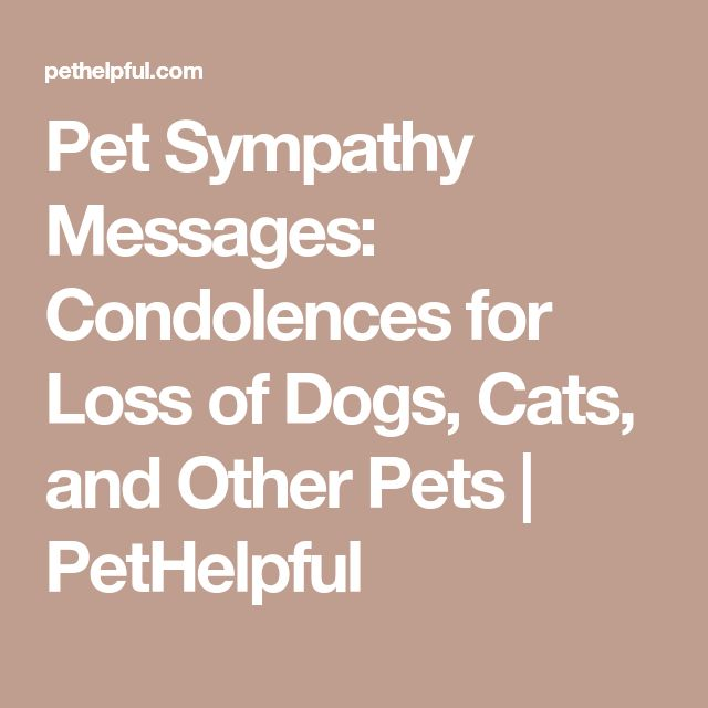The  Best Message For Condolence Ideas On   Sympathy