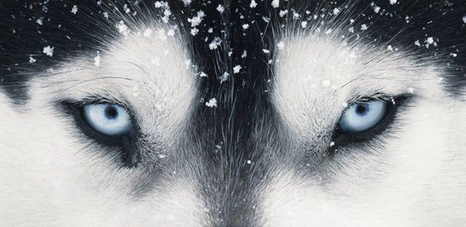 """Os animais em momentos """"quase humanos"""" foram registrados por Tim Flach na série de fotos More Than Human. Flach, que é reconhecido pela originalidade na captura de comportamentos animais, faz com q…"""
