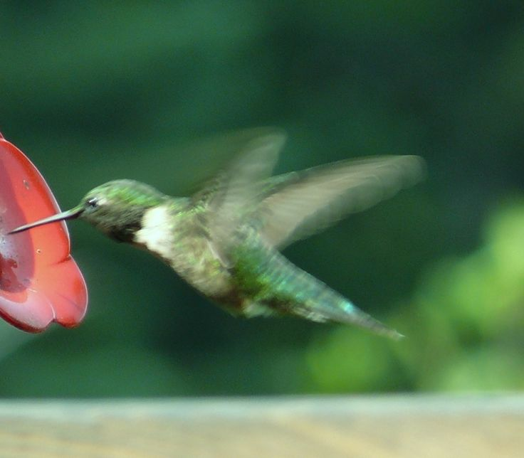 I could sit for hours and watch the humming birds