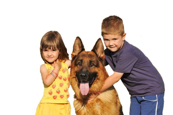 Home Protection Dogs Blog - Home Protection Dogs | Family Guard Dogs for Sale