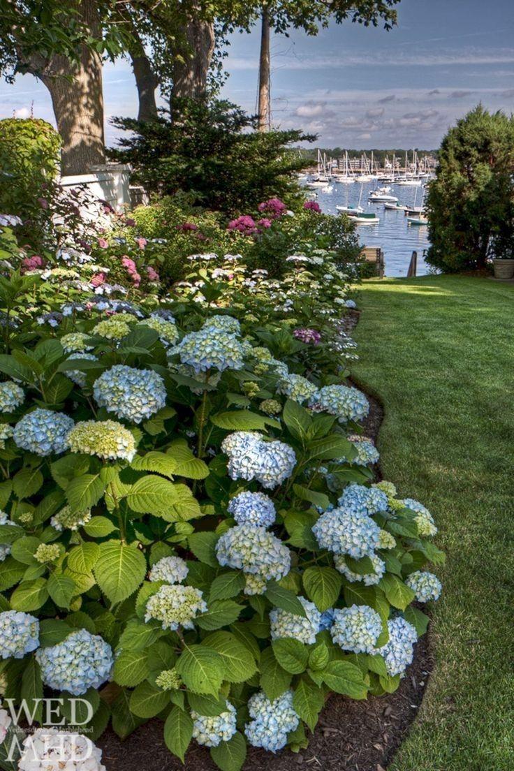 Pin By Jackie On Hydrangeas In The Hamptons Hydrangea Landscaping Beautiful Hydrangeas Gorgeous Gardens