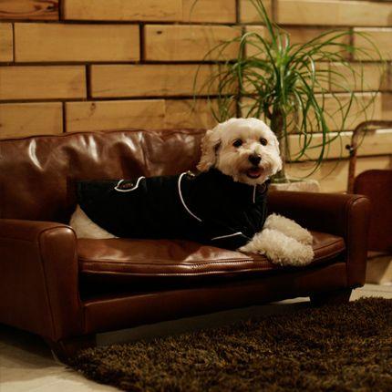 ACME Furniture FRESNOシリーズのドッグベッドはアメリカンビンテージスタイルを独自の価値観でセレクトしています。トラディショナルな中にも遊び心があふれるデザインがアメリカンでマイペースな愛犬にぴったりですね。5キロ未満の小型犬にぴったりです。