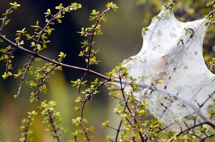 Spidey Webs