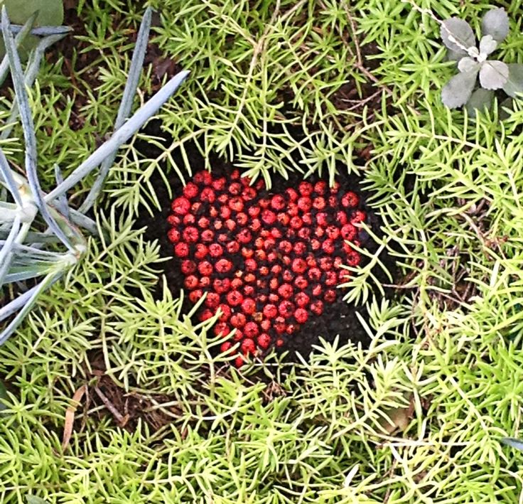 A garden heart - made from seed-pods.