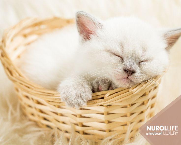 #PetCare hizmetiyle pek çok minik dostunuz bizimle güvende! #NurolLife | www.nurollife.com | 444 6496