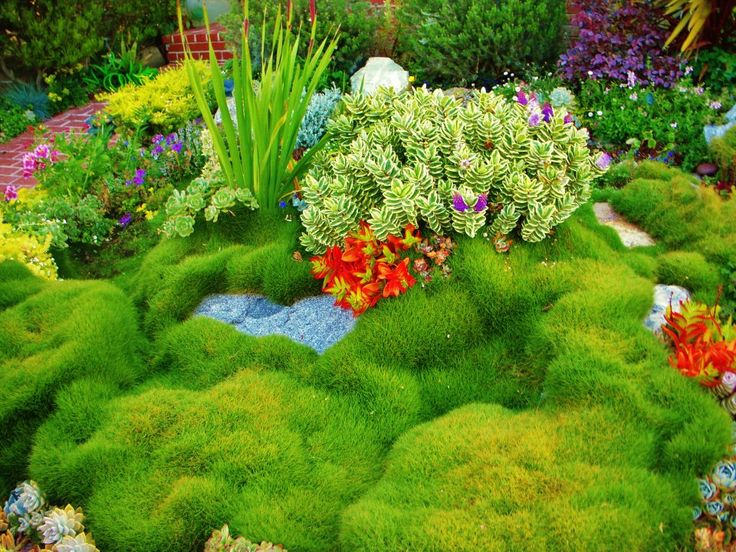 ~♥~ Succulents and drought tolerant Korean grass. one of a kind piece of art in beautiful colorful frontyard!
