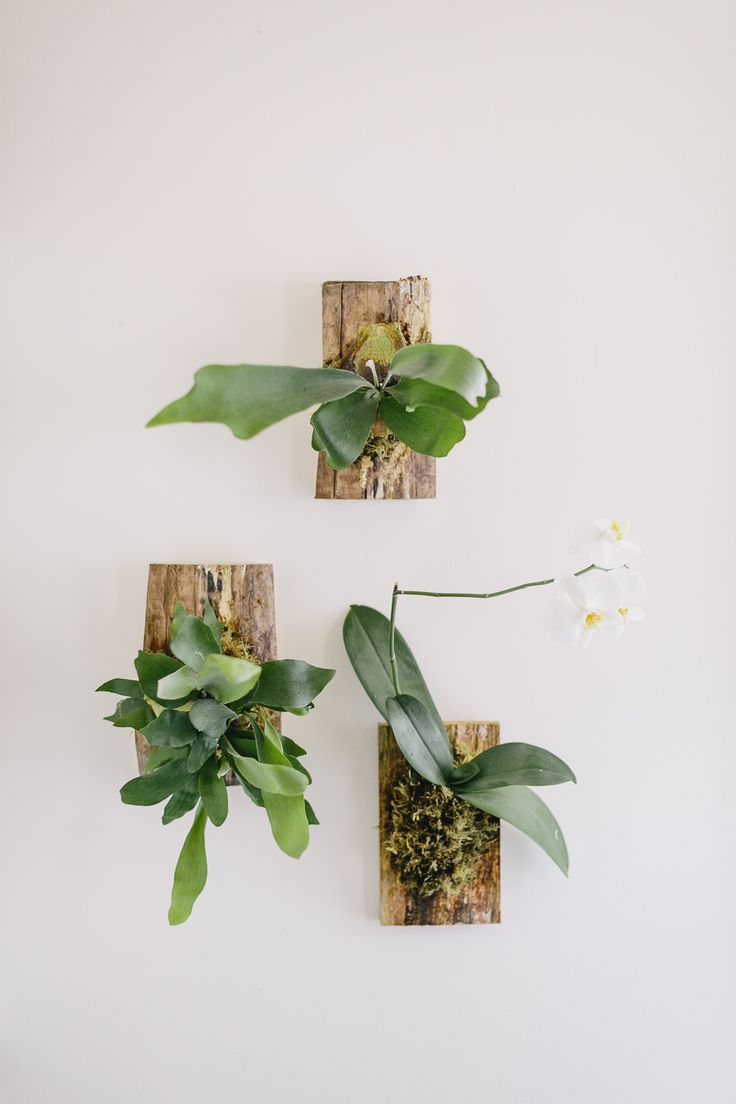 The Fresh Exchange: Mounting a Staghorn Fern with @Lynn Baker Oak