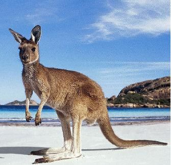 The wildlife of Kangaroo Island, Australia