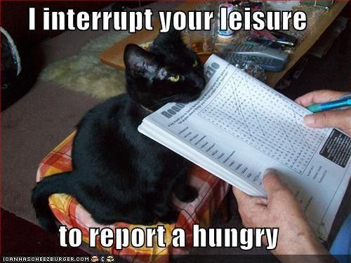 LolFunny Kitty, Dogs, Funny Cat Photos, Funny Pictures, Sunday Brunches, Hungry, True Stories, Black Cat, Animal