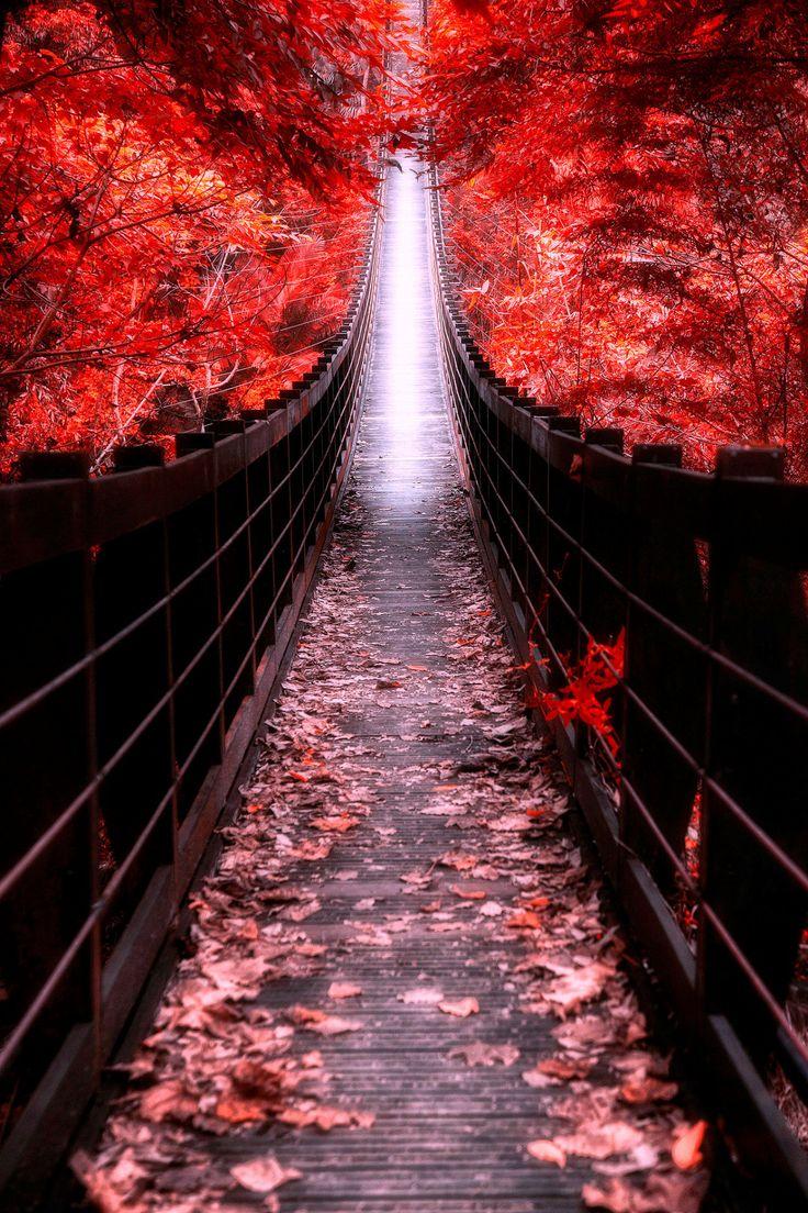 lori-rocks:  The bridge leading to the sky… by  hanson mao