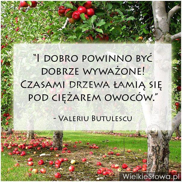 I dobro powinno być dobrze wyważone... #Butulescu-Valeriu,  #Dobro-i-sprawiedliwość, #Równowaga