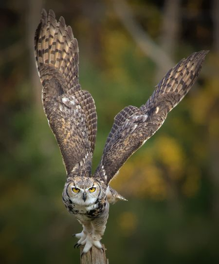 Taking Off. Photo by Margaret Krzepkowski — National Geographic Your Shot
