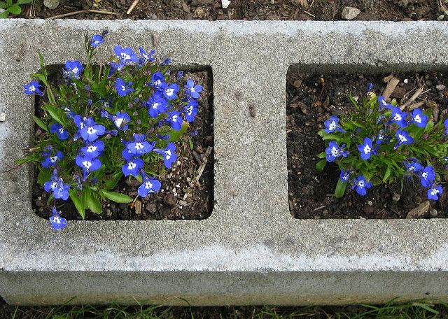 Cement block garden edging??  That is really cool, and probably relatively inexpensive.  Hmmm....