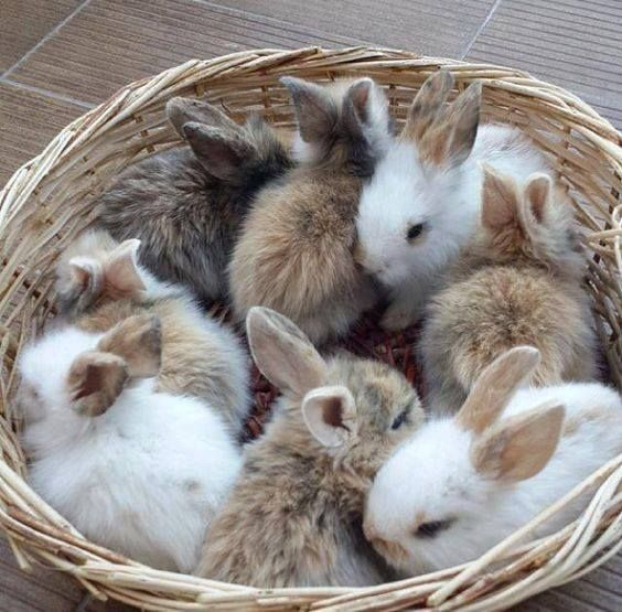 The bunny basket is overflowing with CUTE!