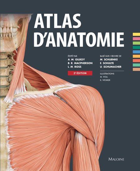 Cet Atlas d'Anatomie est un ouvrage concis, en un seul volume, destiné aux étudiants en médecine. Les dessins ont été sélectionnés pour être les plus instructifs et les plus représentatifs des approches actuelles des dissections. Des diagrammes clés, des résumés simplifiés sous forme de tableaux, des dizaines d'images radiographiques et des corrélations cliniques importantes ont été ajoutés quand cela s'avérait utile. Dans chaque région, les différentes structures... Cote: QM 25 A75 2014 REF
