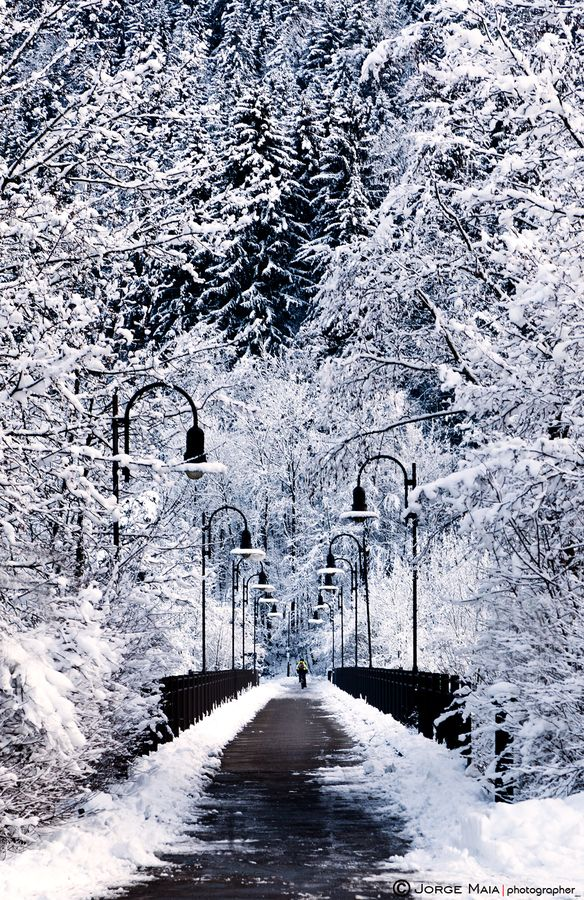 """I don't know what it is with me, but i love pictures of long roads lined with trees/lamp posts...i guess it has a romantic feel.  500px / Photo """"Snowy bridge"""" by Jorge Maia"""