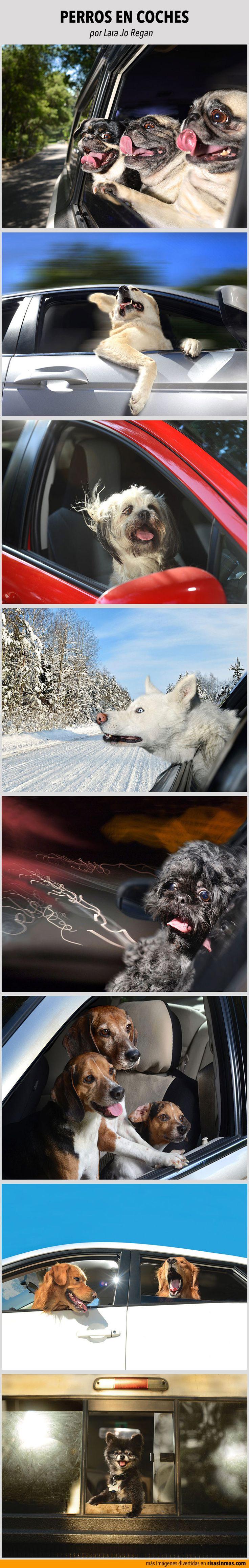 Perros en coches. Fotografías por Lara Jo Regan.