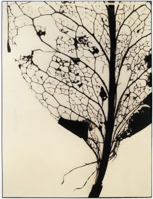 leaves skeleton - Google Search