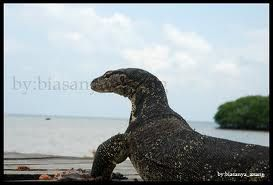 Penghuni Pulau Yang Tangguh.  #PulauBiawak