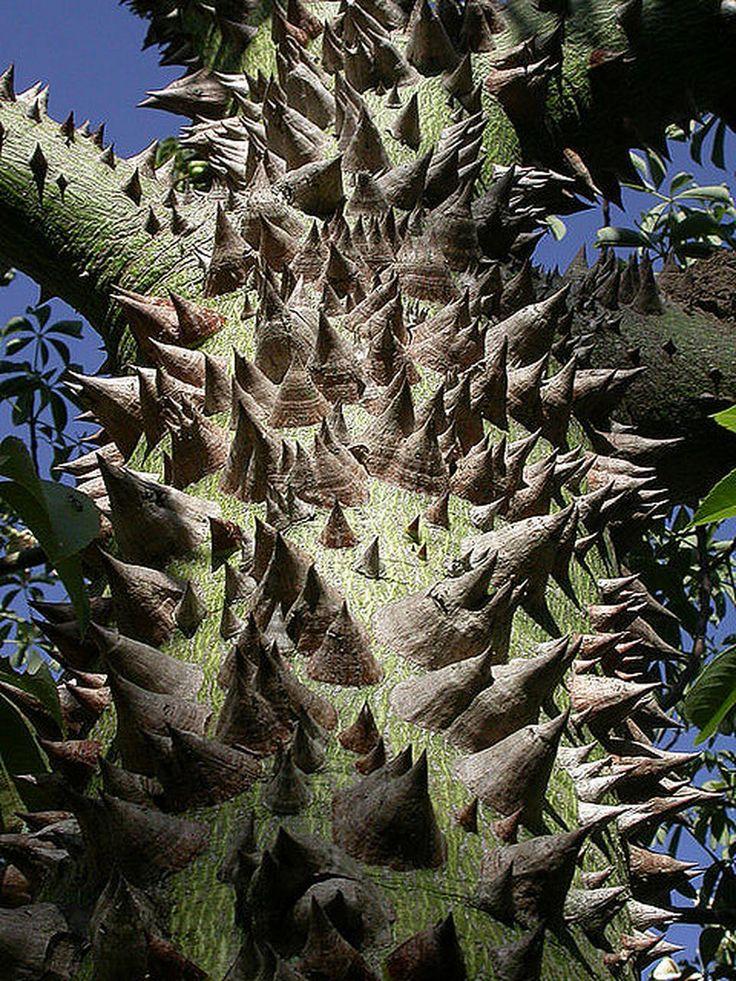 фото красивых необычных деревьев такой женщины