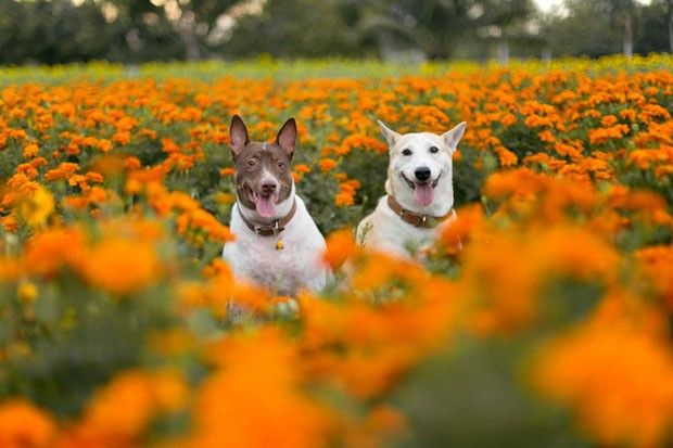 Best Gluta Thai Dog Images On Pinterest Happy Dogs - Meet gluta the smiling dog that beat cancer