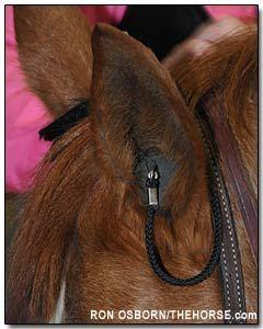 Earplugs for Equines: Can You Hear Me Now? For mounted shooting